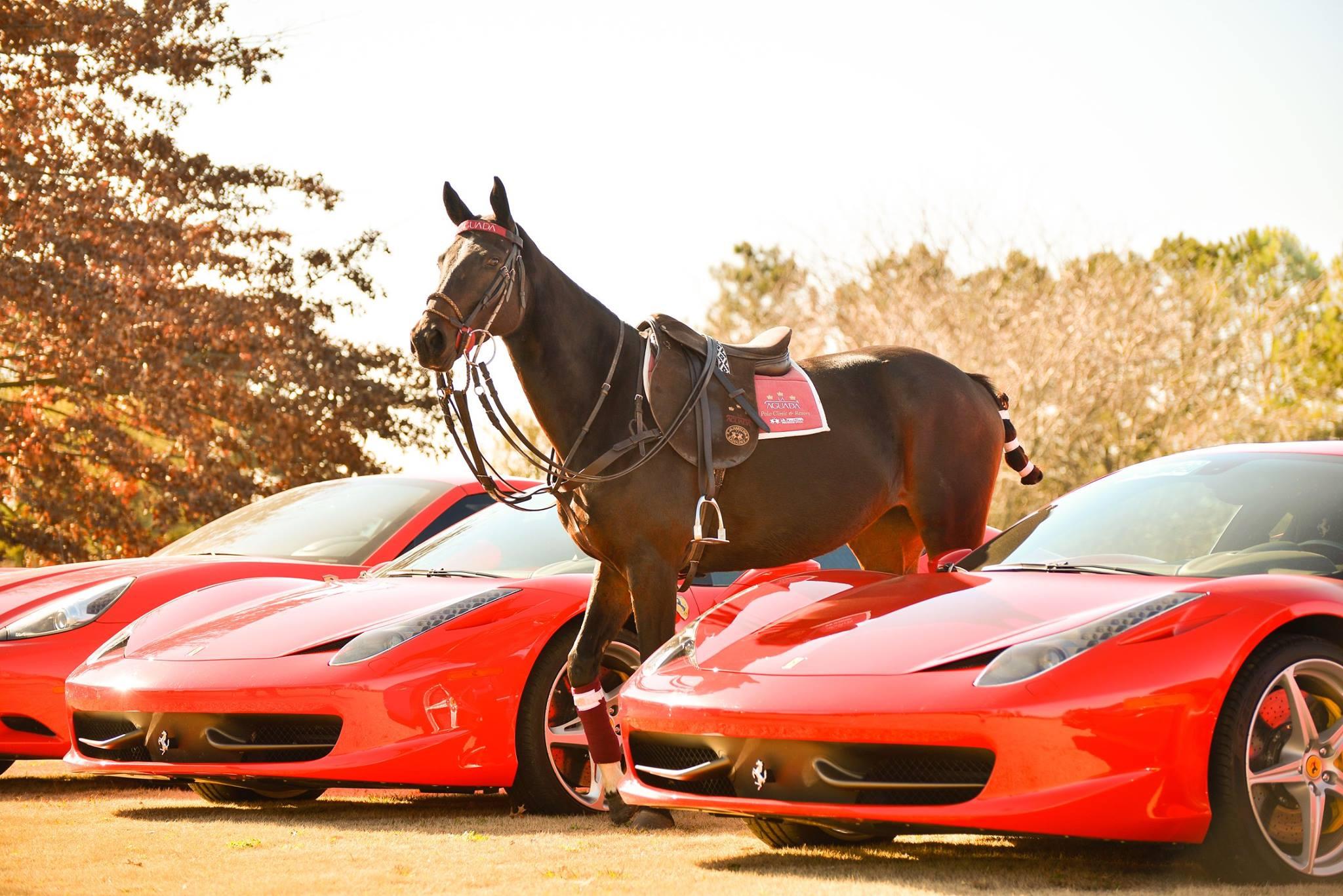 LaAguada_Ferrari4